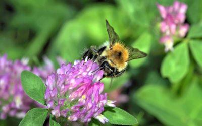 Pollinators – Public awareness campaign