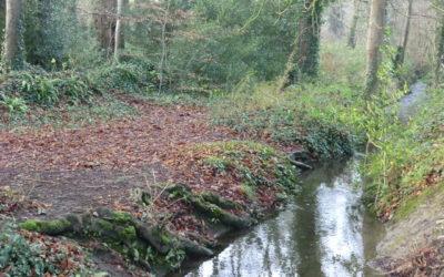 Habitat report on Crodaun woodland