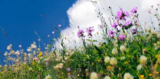 County Biodiversity Plan